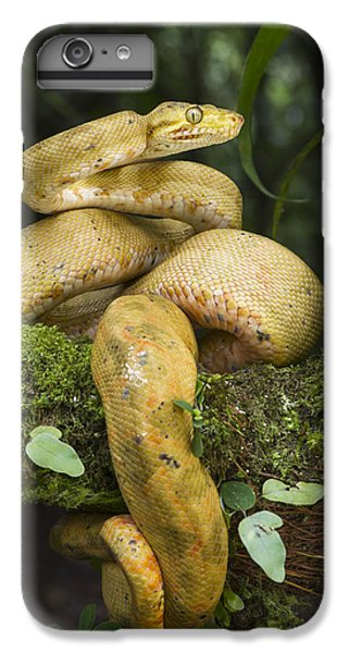 Common Tree Boa -yellow Morph IPhone 7 Plus Case by Pete Oxford