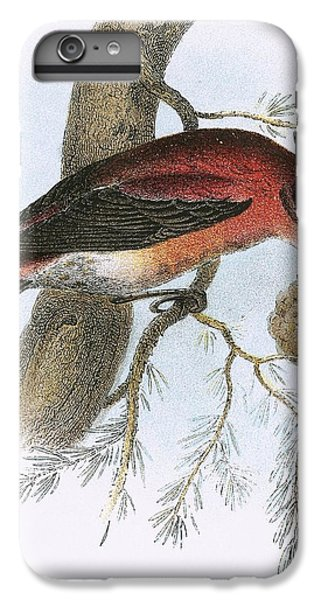 Crossbill iPhone 7 Plus Case - Crossbill by English School