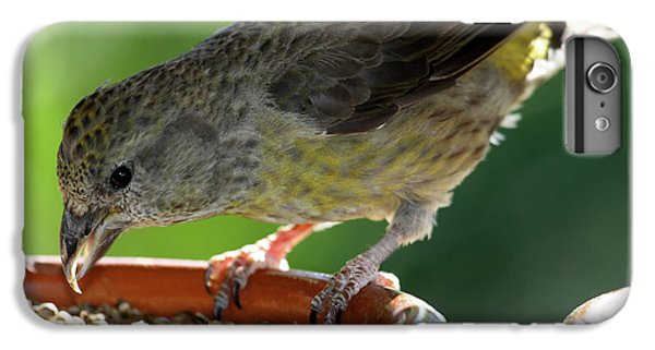 Crossbill iPhone 7 Plus Case - Crossbill Loxia Curvirostra Female by David Santiago Garcia
