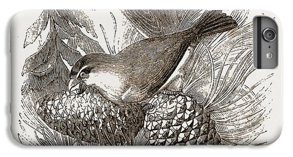 Crossbills IPhone 7 Plus Case by Litz Collection