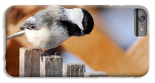 Curious Chickadee IPhone 7 Plus Case by Christina Rollo