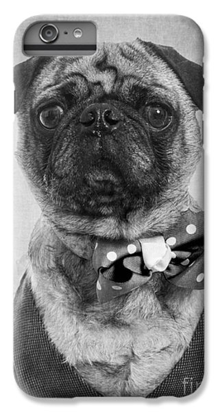 Pug iPhone 7 Plus Case - Dapper Dog by Edward Fielding