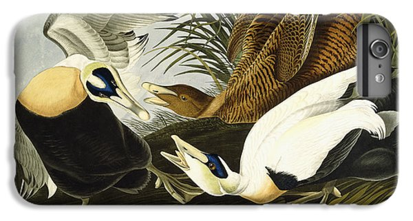 Eider Ducks IPhone 7 Plus Case by John James Audubon