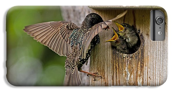 Feeding Starlings IPhone 7 Plus Case by Torbjorn Swenelius