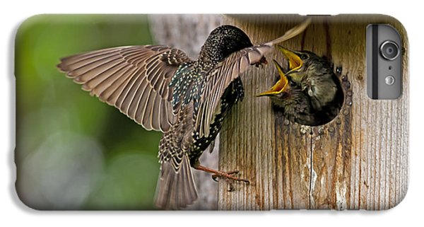 Feeding Starlings IPhone 7 Plus Case by Torbjorn Swenelius
