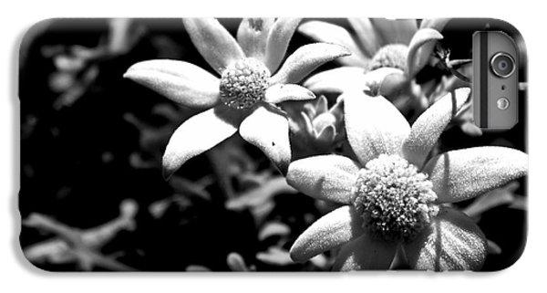 IPhone 7 Plus Case featuring the photograph Flannel Flower by Miroslava Jurcik