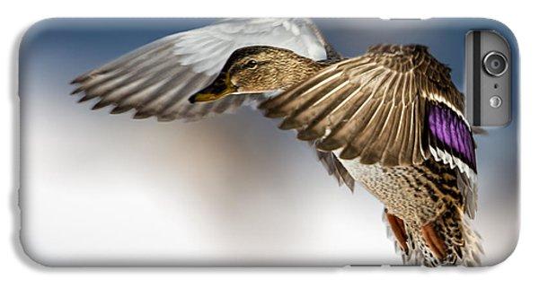 Duck iPhone 7 Plus Case - Flight Of The Mallard by Bob Orsillo