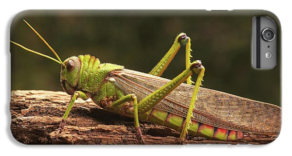 Grasshopper iPhone 7 Plus Case - Giant Grasshopper by Ktsdesign