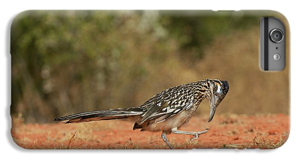Greater Roadrunner (geococcyx IPhone 7 Plus Case