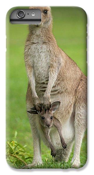 Kangaroo iPhone 7 Plus Case - Grey Kangaroo And Joey  by Yva Momatiuk John Eastcott