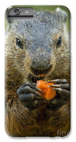 Groundhogs Favorite Snack IPhone 7 Plus Case