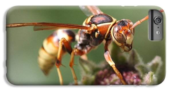 IPhone 7 Plus Case featuring the photograph Hornet On Flower by Nathan Rupert