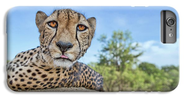 Cheetah iPhone 7 Plus Case - Hungry Cheetah by Alessandro Catta