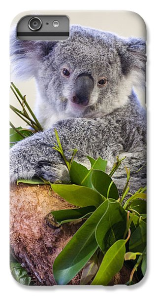 Koala On Top Of A Tree IPhone 7 Plus Case by Chris Flees