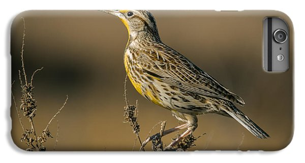 Meadowlark On Weed IPhone 7 Plus Case by Robert Frederick