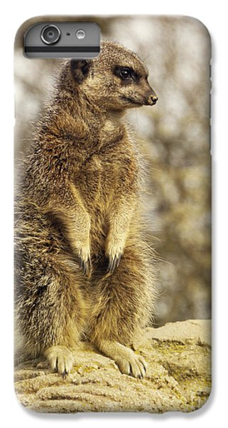 Meerkat iPhone 7 Plus Case - Meerkat On Hill by Pixel Chimp
