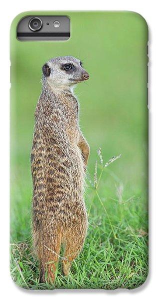 Meerkat iPhone 7 Plus Case - Meerkat Standing On Guard Duty by Peter Chadwick