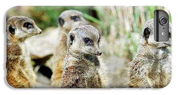 Meerkat iPhone 7 Plus Case - Meerkats by Heiti Paves