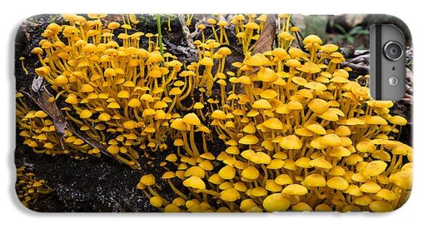 Mushrooms On Tree Trunk Panguana Nature IPhone 7 Plus Case by Konrad Wothe