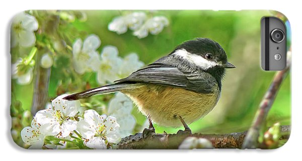 Chickadee iPhone 7 Plus Case - My Little Chickadee In The Cherry Tree by Jennie Marie Schell