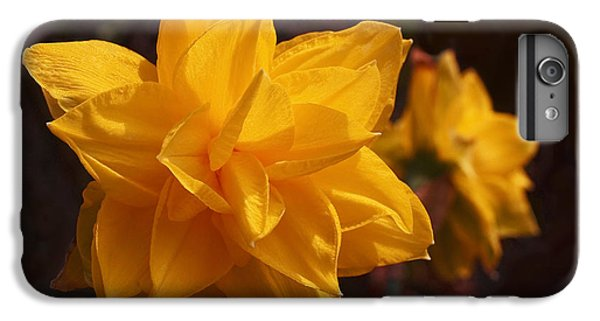 Narcissus Sweet Sue In Full Bloom IPhone 7 Plus Case