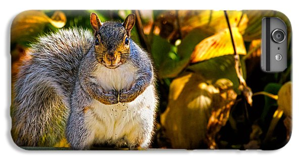 One Gray Squirrel IPhone 7 Plus Case by Bob Orsillo