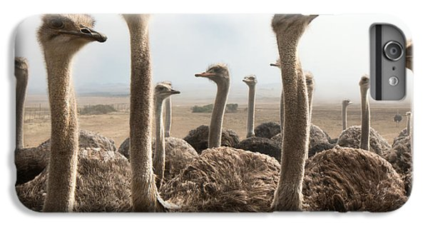 Ostrich iPhone 7 Plus Case - Ostrich Heads by Johan Swanepoel