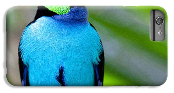 Paradise Tanager IPhone 7 Plus Case by Nathan Rupert