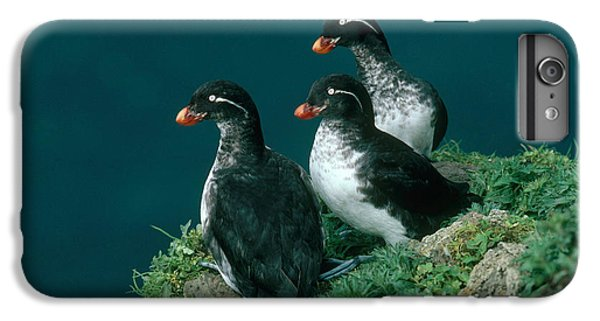 Auklets iPhone 7 Plus Case - Parakeet Auklet by Art Wolfe