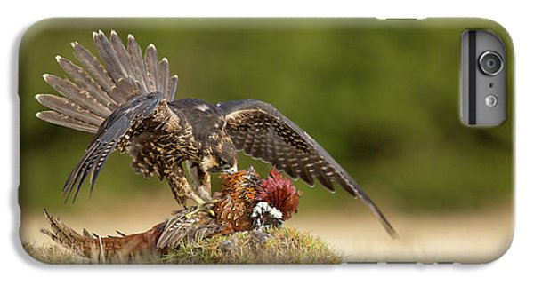 Falcon iPhone 7 Plus Case - Peregrine Falcon by Milan Zygmunt