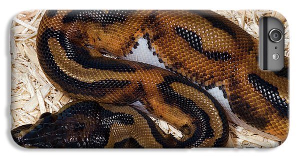 Python iPhone 7 Plus Case - Piebald Royal Python by Nigel Downer
