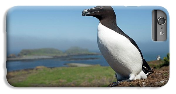 Razorbill On A Coastal Ledge IPhone 7 Plus Case by Simon Booth