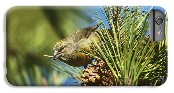 Crossbill iPhone 7 Plus Case - Red Crossbill Eating Cone Seeds by Paul J. Fusco