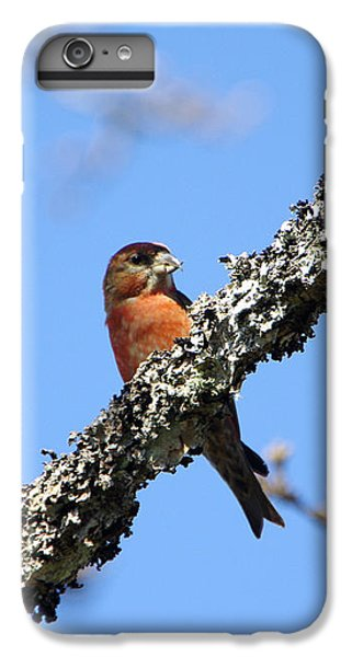 Crossbill iPhone 7 Plus Case - Red Crossbill Finch by Marilyn Wilson