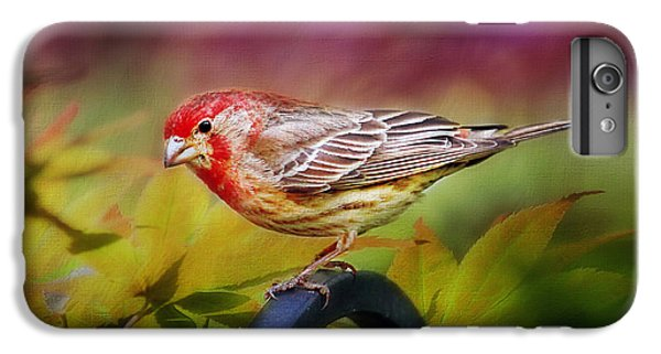 Red Finch IPhone 7 Plus Case by Darren Fisher