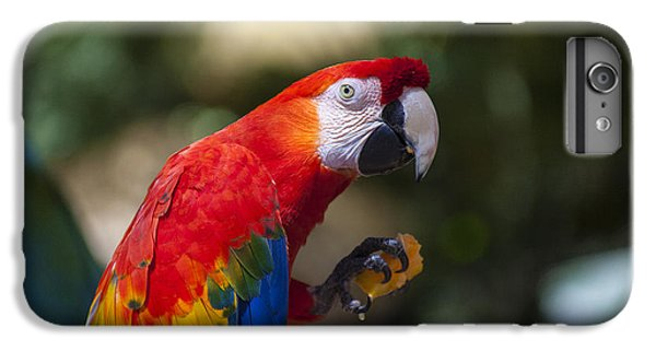 Red Parrot  IPhone 7 Plus Case by Garry Gay