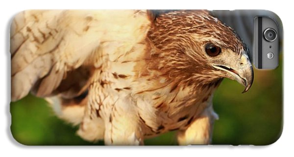Red Tailed Hawk Hunting IPhone 7 Plus Case