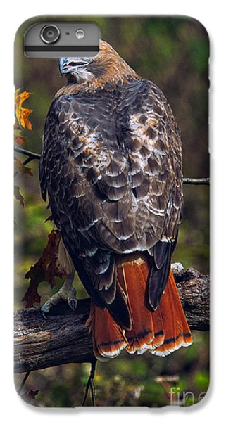Hawk iPhone 7 Plus Case - Red Tailed Hawk by Todd Bielby
