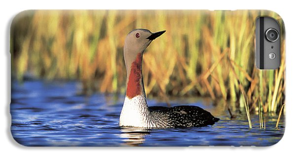 Red-throated Loon IPhone 7 Plus Case by Paul J. Fusco