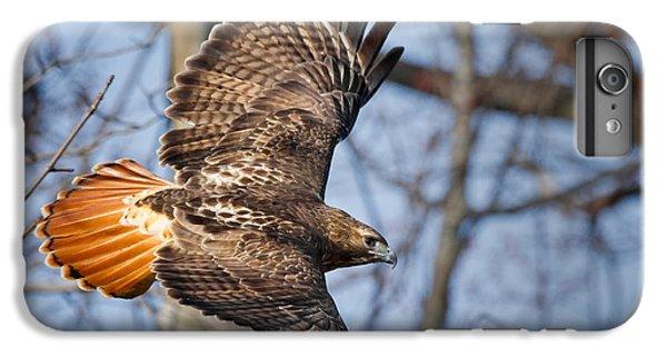 Hawk iPhone 7 Plus Case - Redtail Hawk by Bill Wakeley