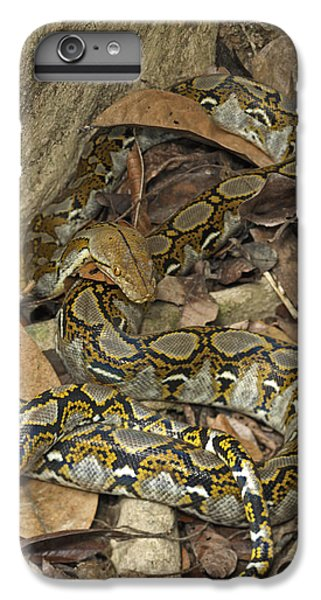 Reticulated Python IPhone 7 Plus Case