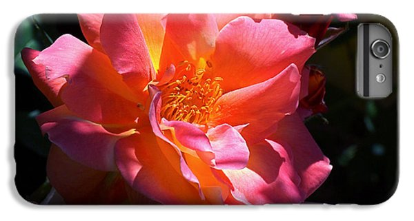 Rose Glow IPhone 7 Plus Case