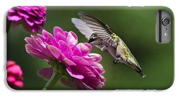 Simple Pleasure Hummingbird Delight IPhone 7 Plus Case by Christina Rollo