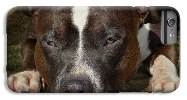 Bull iPhone 7 Plus Case - Sleepy Pit Bull by Larry Marshall