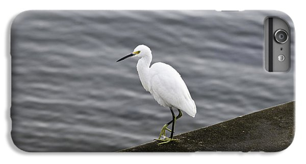 IPhone 7 Plus Case featuring the photograph Snowy Egret by Anthony Baatz