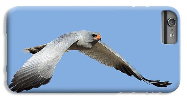 Hawk iPhone 7 Plus Case - Southern Pale Chanting Goshawk In Flight by Johan Swanepoel