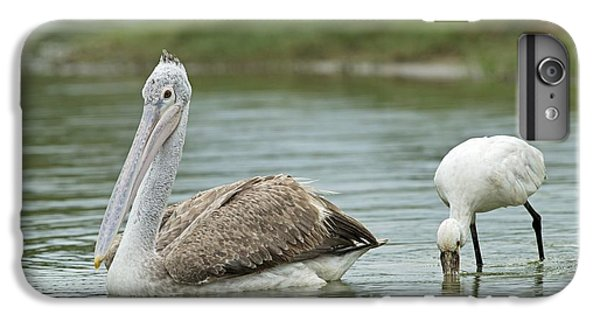 Spoonbill iPhone 7 Plus Case - Spot-billed Pelican & Eurasian Spoonbill by Tony Camacho