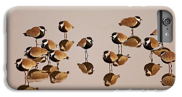Spur-winged Lapwing (vanellus Spinosus) IPhone 7 Plus Case