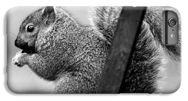 IPhone 7 Plus Case featuring the photograph Squirrels by Ricky L Jones