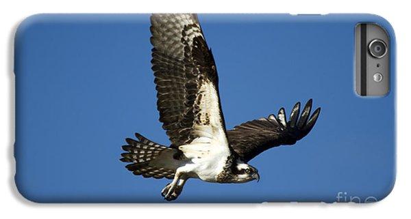 Osprey iPhone 7 Plus Case - Take Flight by Mike  Dawson